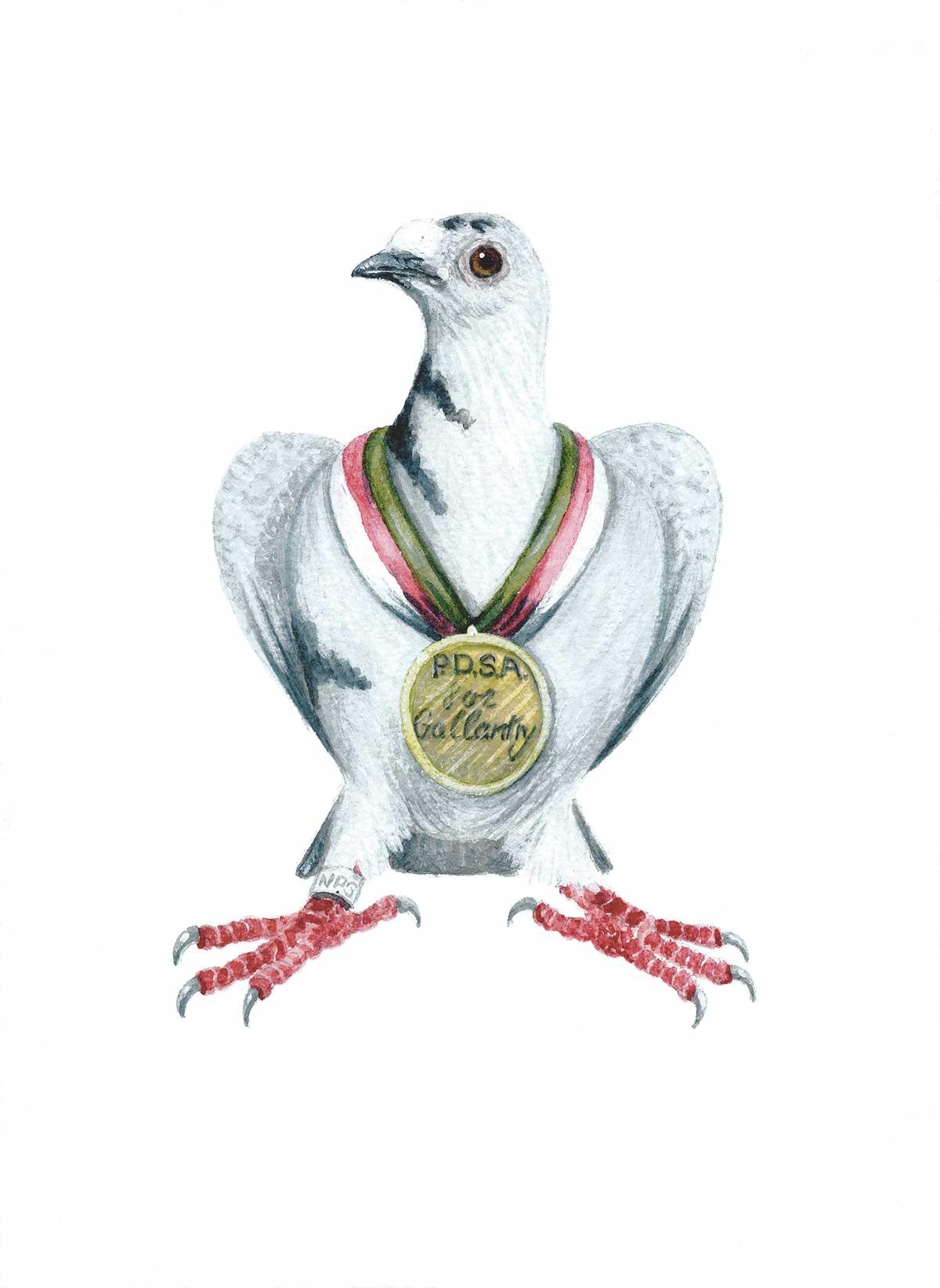 pigeonColour